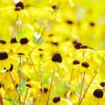 Flowers on field — Stock Photo