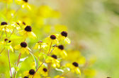 Yellow flowers — Foto de Stock