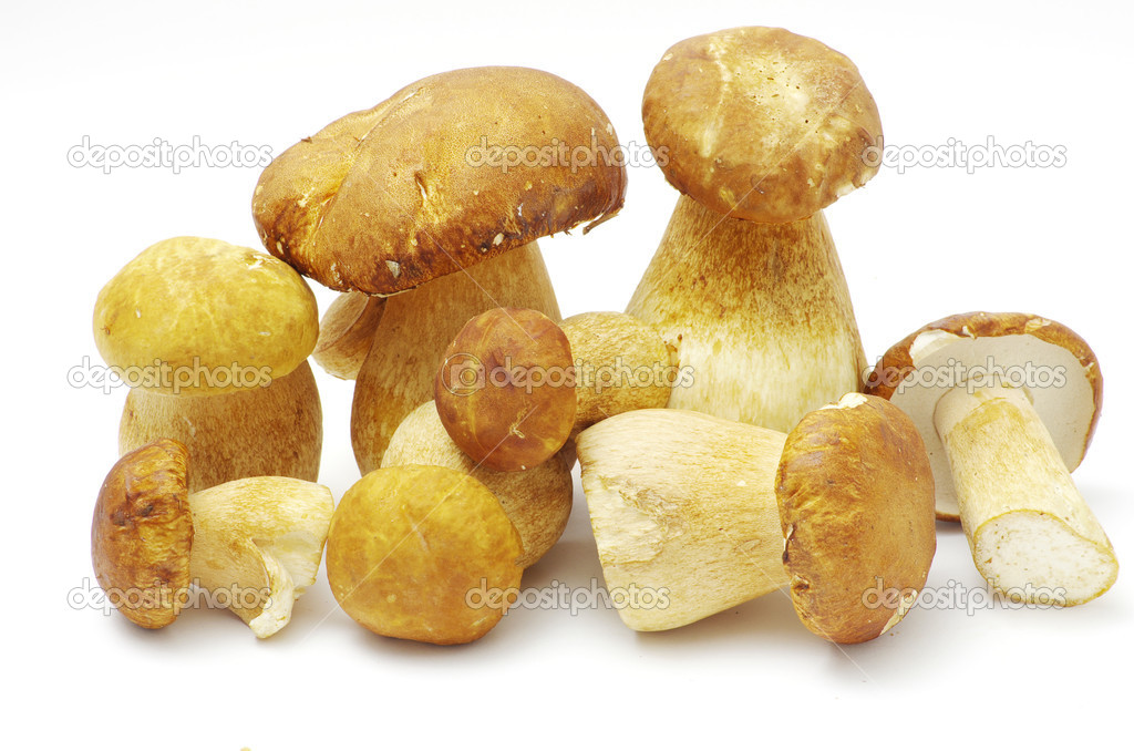 Boletus edulis mushrooms on over white background — Stock Photo #6645125