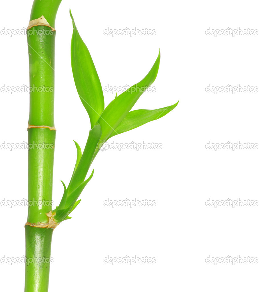 Bamboo isolated on a white background — Stock Photo #6645150