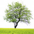 Tree on field — Stock Photo