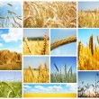 Stock Photo: Harvest concepts