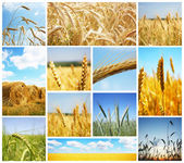 Harvest concepts — Stock fotografie