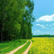 Beautiful summer landscape — Stock Photo