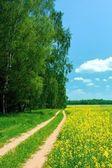 красивый летний пейзаж — Стоковое фото