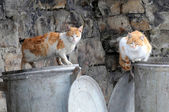 Two Stray Cats on Garbage Containers — Stock Photo