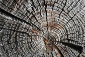 Perfil antigo log seco — Fotografia Stock