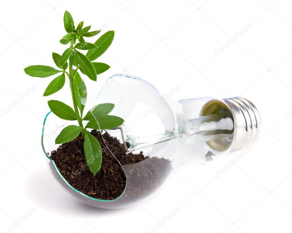 Lightbulb With Plant Growing Inside Stock Photo Bedolaga 5995931