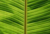 Tropical Leaf Close-up — Stock Photo