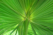 Exotic Tropical Leaf Close-up — Stock Photo