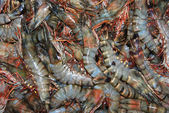 Fresh shrimps — Stockfoto