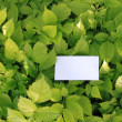 Green leaves with empty card — Stock Photo #6251780