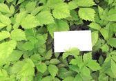 Gröna blad med tomma kort — Stockfoto