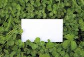 Zelené listy jetele s prázdnou kartu — Stock fotografie