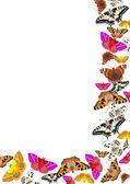 飞蝴蝶 — 图库照片