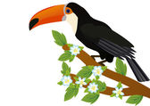 Toucan on a branch with flowers — Stock Photo