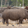 Rhino — Stock Photo #5630877