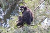Monkey — Stockfoto