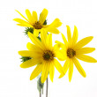 Yellow flowers — Stock Photo #6655965