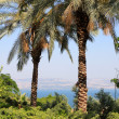 Sea of Galilee — Stock Photo