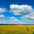 Yellow field — Stock Photo