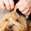 Professional grooming - 