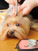 Profissional grooming — Foto Stock