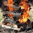 Burning fire wood — Stock Photo