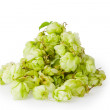 Hop isolated on white background — Stock Photo #6681193