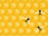 Honeycomb a včely — Stock vektor