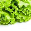Green Lettuce — Foto Stock
