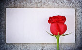 Lettre et rose rouge — Photo