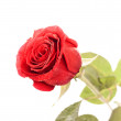 Red Rose Bud — Stock Photo #5748703