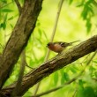 Finch on Tree — Stock Photo