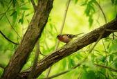Finch on Tree — Stock Photo