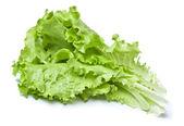 Zielona sałata — Zdjęcie stockowe