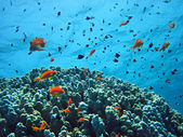 Group of coral fish in water. — Stock Photo