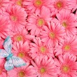 Background of  flower. - Stock Photo