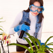 Foto Stock: Woman looking after houseplant