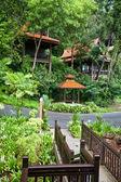 Peregrina resort en la selva. ecoturismo. — Foto de Stock