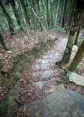 Ormanda iletken adımlar. eko-turizm. — Stok fotoğraf