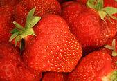 Verse aardbeien. — Stockfoto