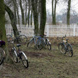 Bicycles — Stockfoto #6097933