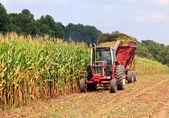 Filas de listos para la cosecha de maíz — Foto de Stock