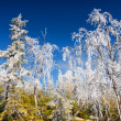 Hoarfrost - Stock fotografie