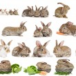 Stock Photo: Set of brown rabbit bunny isolated