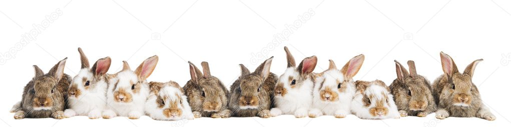 Group of young light brown and spotted rabbits sitting in a raw isolated on white — Stock Photo #5418571