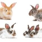 Set of baby bunny rabbits — Stock Photo
