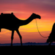 Silhouette of Arab with camel at sunrise — Stock Photo #6492166