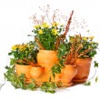 Set of indoor plants in flowerpots — Stock Photo